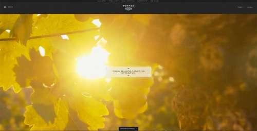 6 плагінів WordPress, які дозволять сайту залишатися в тренді